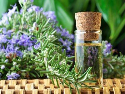 Ученые доказали, что запах розмарина улучшает память