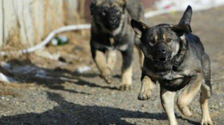 Ученые выяснили, на кого чаще всего нападают собаки